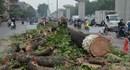 Vụ chặt hạ cây xanh ở Hà Nội: Xử nghiêm mới giữ được lòng tin