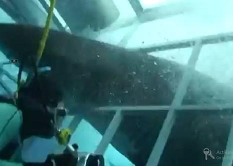 Thợ lặn hoảng loạn vì cá mập lao tới tấn công