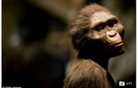 Tìm thấy hóa thạch tổ tiên mới của loài người ?
