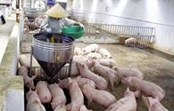 Việt Nam trước ngưỡng cửa TPP: 10 triệu nông dân lao đao