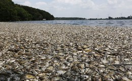 Nguyên nhân thủy triều đỏ làm cá chết hàng loạt mà Bộ TNMT nói đến là gì?