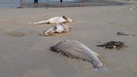 Tin Thời Sự 25.8: Thêm nhiều mẫu cá Hà Tĩnh nhiễm xyanua kịch độc