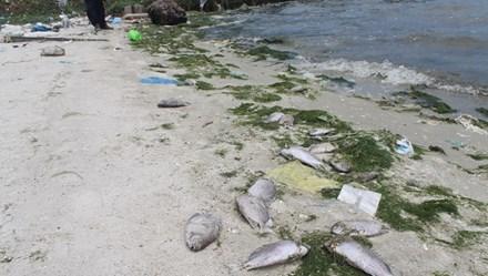 Các hộ dân mất gần tỉ đồng vì cá chết sau sự cố tràn nước thải Nhà máy Đường Khánh Hòa