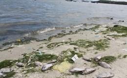 Công bố nguyên nhân sự cố tràn nước thải của Nhà máy Đường Khánh Hòa