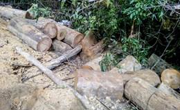 Vụ phá rừng phòng hộ đầu nguồn ở Khánh Hòa: Đình chỉ công tác trạm trưởng trạm bảo vệ rừng