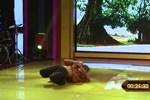 Video: Lệ Rơi múa túy quyền khiến giám khảo ''ngơ ngác''