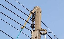 Kinh hãi cảnh trăn dài 3m cố thủ trên cột điện