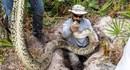 Thuê thợ săn lùng giết trăn Miến Điện khổng lồ ở Mỹ