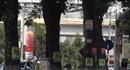 Treo quảng cáo trên cột điện, cây xanh sẽ bị phạt tiền từ 5-10 triệu đồng