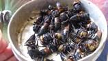 """10 loại """"viagra"""" từ sâu bọ được đàn ông Việt chuộng nhất"""