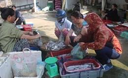 """Miền Trung: Thị trường hải sản đang """"ấm"""" trở lại"""