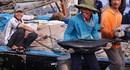 Nhộn nhịp cảng cá Thọ Quang giữa mùa biển lặng