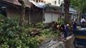 Cơn mưa lốc chiều 13.6 làm đổ hơn 1.000 cây xanh tại Hà Nội
