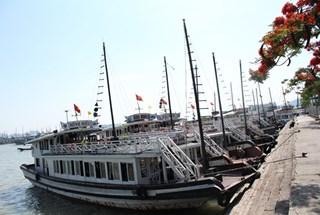 Bùng nổ số lượng tàu du lịch trên vịnh Hạ Long: Tạm dừng đóng mới và đóng thay thế