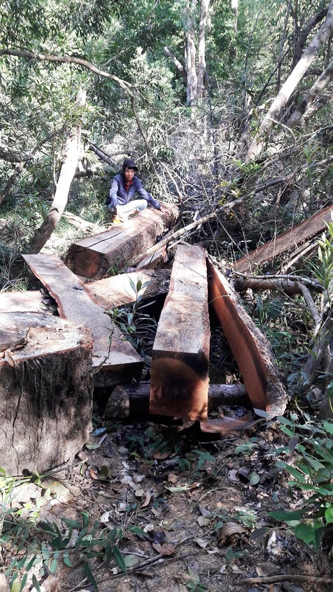 rừng bị tàn phá tan hoang