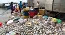 Bộ TNMT đến Quảng Bình khảo sát hiện tượng cá chết bất thường