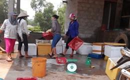 """Quảng Trị:  Thương lái chỉ thu mua cá đục """"xuất khẩu sang Trung Quốc"""""""