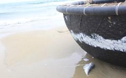 Đà Nẵng: Các chỉ số kết quả phân tích mẫu nước biển nằm trong giới hạn cho phép
