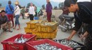 Nhộn nhịp cảnh thu mua hải sản khi thuyền vừa cập bến ở Vũng Áng