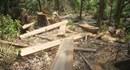 Quảng Nam: Con trưởng công an xã san ủi 0,8ha rừng tự nhiên