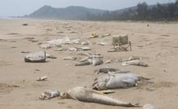 Công an vào cuộc làm rõ trách nhiệm sở, ngành trong vụ Formosa đầu độc biển