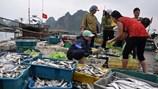 Đừng im lặng: Hải sản sạch vẫn đang giãy giụa trong lưới rối, nghi ngờ biển có thể bẩn trở lại?
