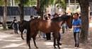 UBND tỉnh Bình Dương cấp phép đầu tư trường đua ngựa cho Công ty Đại Nam