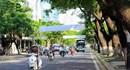 Đà Nẵng: Mua bảo hiểm hệ thống cây xanh đô thị