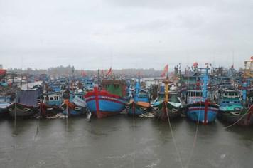 Hơn 400 tàu cá của ngư dân Quảng Ngãi chưa vào bờ tránh bão