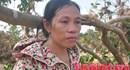 Hà Tĩnh: Vườn bưởi đặc sản Phúc Trạch tan hoang sau lũ