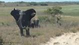 Kinh hoàng cảnh con voi tức giận xô đổ xe của du khách