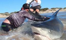 """Ngư dân nắm đuôi cá mập hổ, đùa giỡn với """"tử thần"""""""