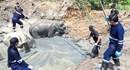 Đau lòng đàn voi quý hiếm chết thảm vì đói khát khi sa hố bùn