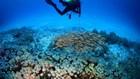 Khám phá Pemuteran tuyệt đẹp ít ai biết ở đảo Bali