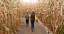 Lạc lối trong những mê cung ngóc ngách, ma mị giữa cánh đồng ngô