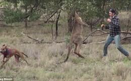 Giải cứu thú cưng, người đàn ông tung cú đấm khiến kangaroo choáng váng