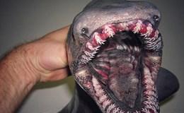 """Ngư dân Nga chia sẻ bộ sưu tập """"quái vật đại dương"""" khiến cả thế giới kinh ngạc"""