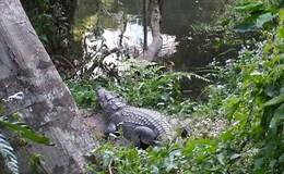 Suýt mất mạng vì nổi hứng chụp ảnh tự sướng cùng... cá sấu