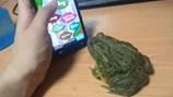 Con ếch dùng lưỡi chơi game điệu nghệ trên điện thoại gây sốt mạng