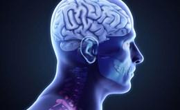 Những thực phẩm nên ăn khi bị mắc chứng rối loạn não
