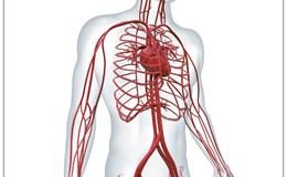 Những mối nguy hại cơ thể phải đối mặt khi lưu thông máu kém