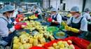 Công nghiệp chế biến rau quả, miếng bánh ngon đang bị bỏ ngỏ…