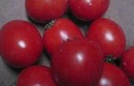Cà chua chín cực nhanh nhờ hóa chất lạ