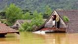 Sau lũ lụt bà con nông dân cần lắm cây con giống