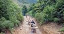 Nên ngăn chặn phá rừng ngay từ xưởng chế biến gỗ