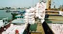 Năm mới cần một định hướng mới cho xuất khẩu gạo