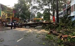 Xâm hại cây xanh đô thị - chuyện không thể thờ ơ