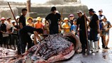 Lễ hội chém giết động vật: Không phải điều gì lạ