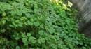 May nhà trọ có vườn nên trồng được rau sạch để ăn