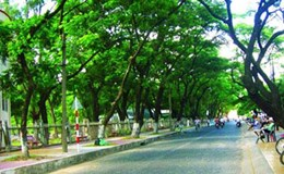 Hà Nội sẽ cử cán bộ ra nước ngoài học về quản lý cây xanh